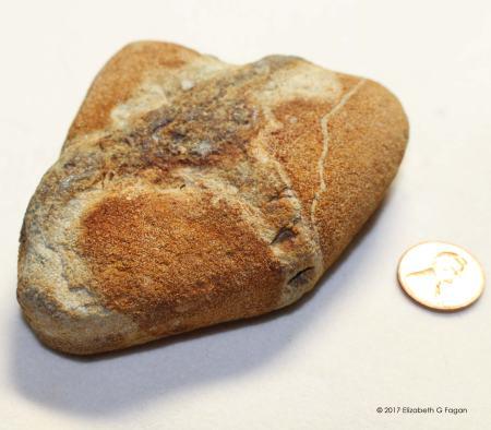 Extinct Paleozoic predecessor of starfish and sand dollar , by Elizabeth G Fagan, lakemichigansleftcoast.com, Lake Michigans Left Coast