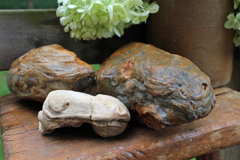 Skulls of extinct Permian amphibians and reptiles fossilized into chert and sandstone by Elizabeth G Fagan, lakemichigansleftcoast.com, Lake Michigans Left Coast