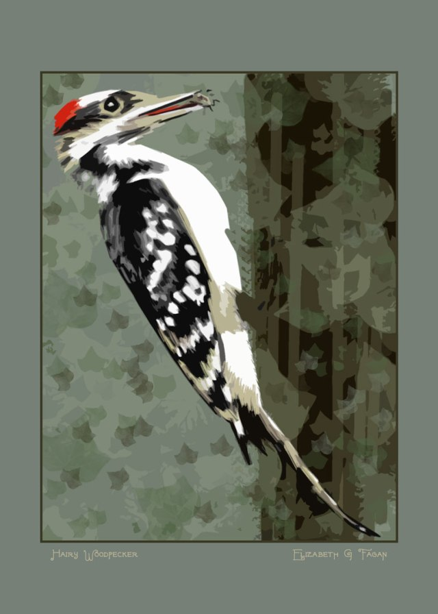 Hairy Woodpecker © Elizabeth G Fagan, lakemichigansleftcoast.com, Lake Michigan's Left Coast