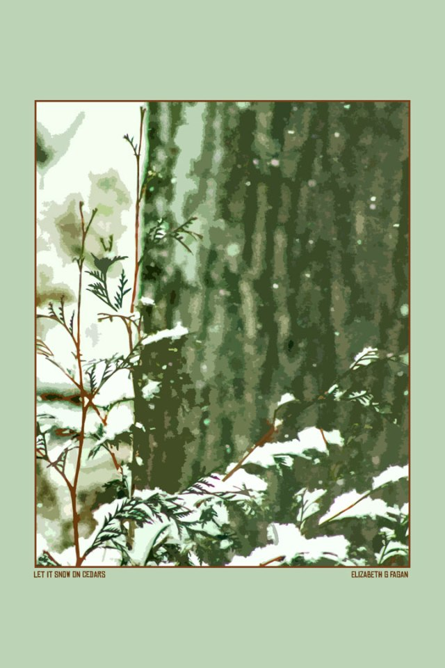 Let It Snow on Cedars © Elizabeth G Fagan, lakemichigansleftcoast.com, Lake Michigan's Left Coast