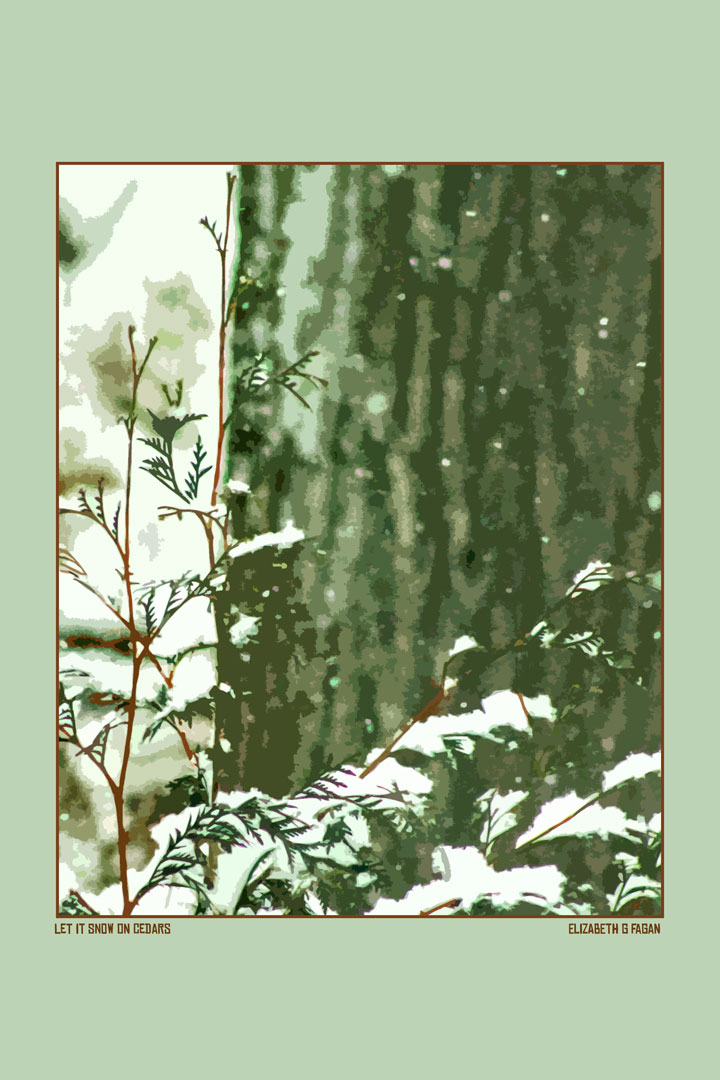 Let It Snow on Cedars © Elizabeth G Fagan, lakemichigansleftcoast.com, Lake Michigan's Left Coast