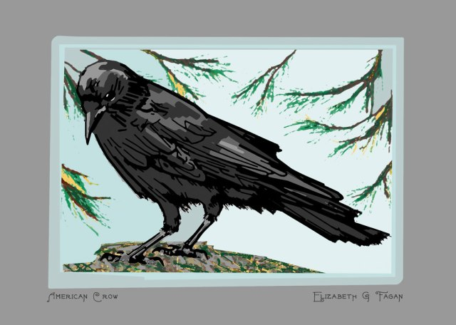 American Crow © Elizabeth G Fagan, lakemichigansleftcoast.com, Lake Michigan's Left Coast