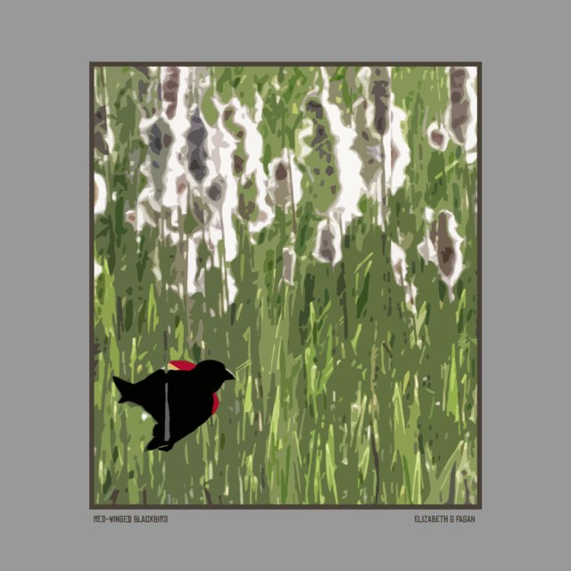 Red-Winged Blackbird © Elizabeth G Fagan, lakemichigansleftcoast.com, Lake Michigan's Left Coast