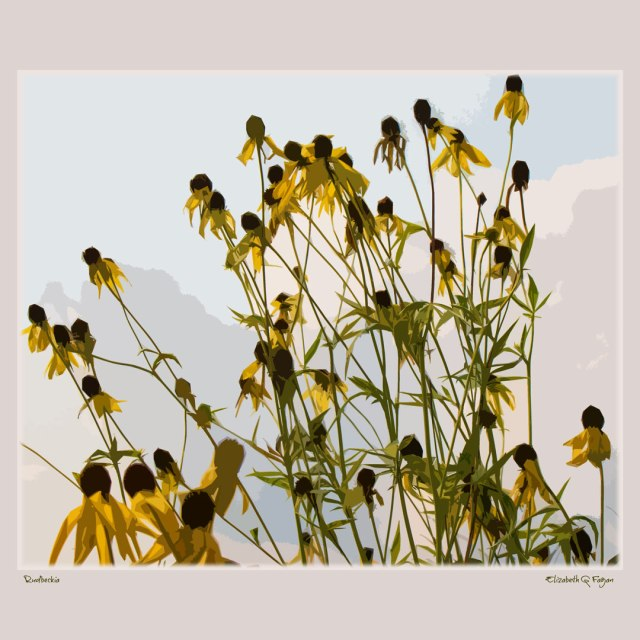 Rudbeckia © Elizabeth G Fagan, lakemichigansleftcoast.com, Lake Michigan's Left Coast