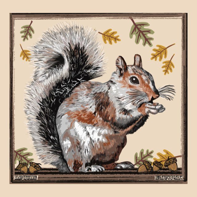 Gray Squirrel © Elizabeth G Fagan, lakemichigansleftcoast.com, Lake Michigan's Left Coast