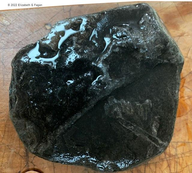 Carboniferous Plant Fossil with Fern, Lake Michigan's Left Coast, lakemichigansleftcoast.com, Elizabeth G Fagan
